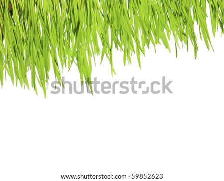 green grass on a white isolated background - stock photo