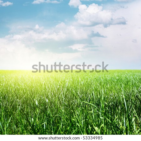 Green grass on meadow and sky with clouds