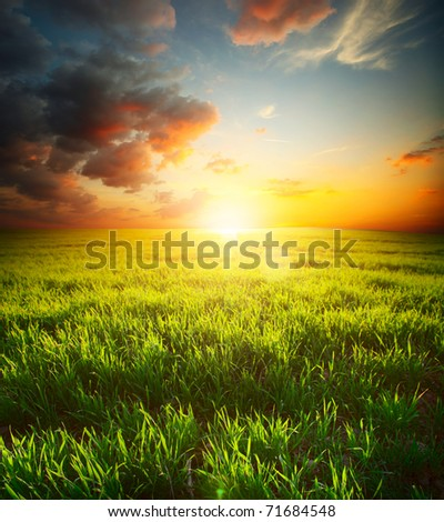 Green grass on meadow and sky with clouds. Focus on front grass