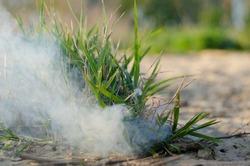 Green grass on sandy gound with smoke