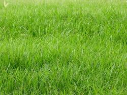 green grass on the gound