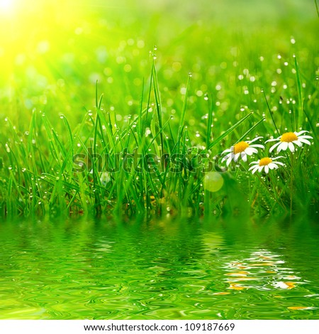 green grass on the water