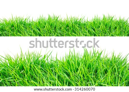 green grass on white background. - Shutterstock ID 314260070