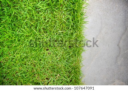 green grass on white sand stone background