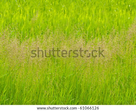 Green grass panorama background. Shaloow deep of field - stock photo