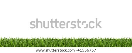 Green grass panorama isolated on white.