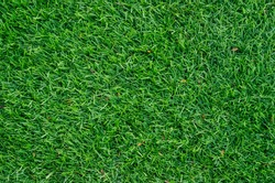 Green grass pattern and texture for background. Close-up