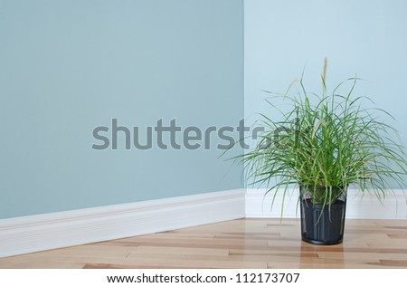 Green grass plant decorating the corner of an empty room.