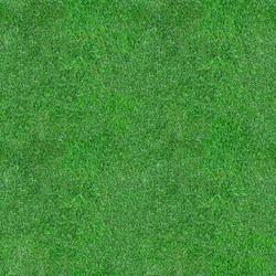 Green Grass Seamless Texture. Grass Lawn Backdrop.