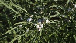green grass  snails on a summer meadow