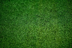 Green grass soccer field close-up background.