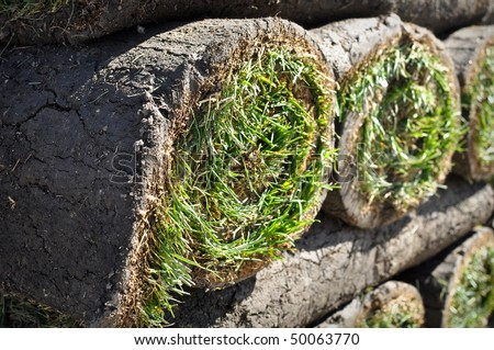 Green Grass Sod Background