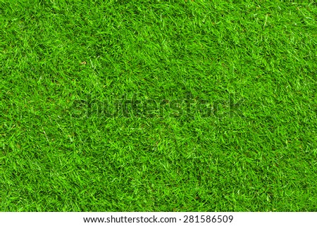 Green grass texture - Shutterstock ID 281586509