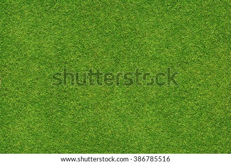 Photo of  green grass texture