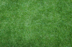 green grass texture as background image