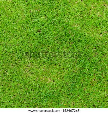 Green grass texture background. - Shutterstock ID 152467265