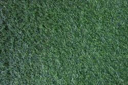 Green grass texture background,Green natural, dark green.