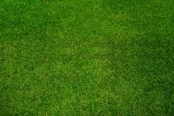 Green grass texture background, top view