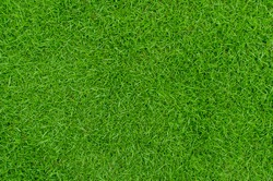 Green grass texture background Top view of bright grass garden Idea concept used for making green backdrop, lawn for training football pitch, Grass Golf Courses green lawn pattern textured background.