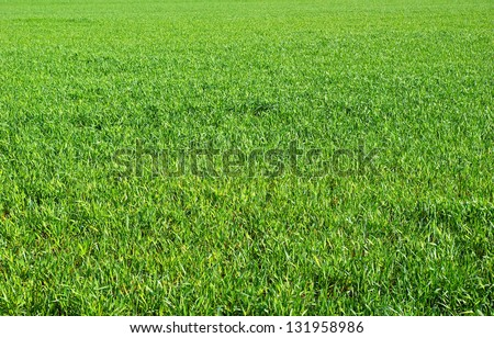 Green grass texture from a  field #131958986