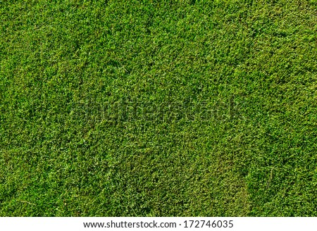 green grass texture from a...