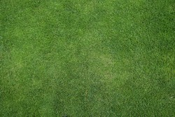 green grass texture or background of golf course and football soccer field