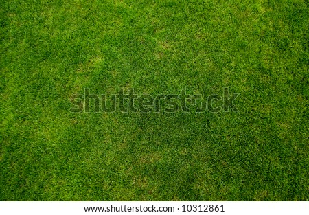 Green grass texture top view - stock photo