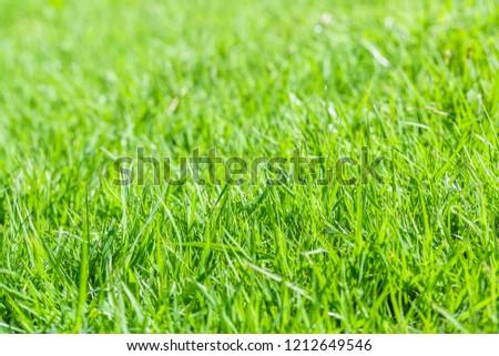 Green grass textured background #1212649546