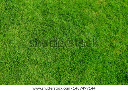 green grass top view outdoor background.                                #1489499144