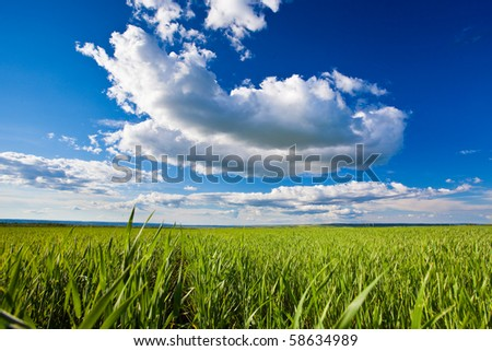 green grass under blue skies with white clouds