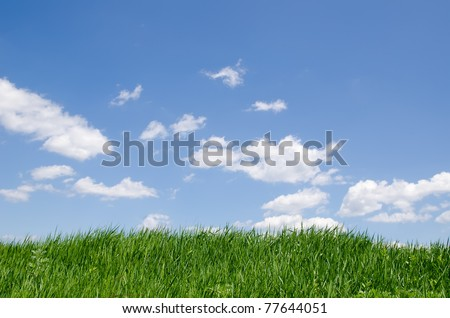 green grass under cloudy sky