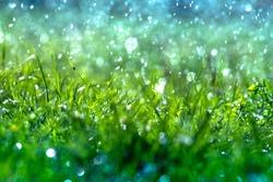 Green grass under water drops sun day light close up