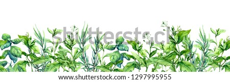 Green grass, wild plants, meadow herbs, summer field. Floral horizontal border. Watercolor stripe