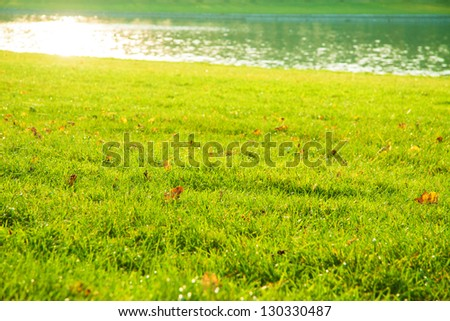 Green grass with autumn leaves with lake and sunshine in the background