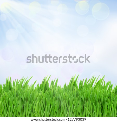 green grass with blue sky  in sunny day