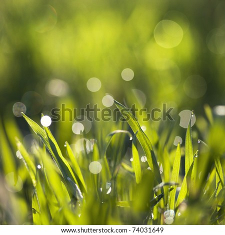 green grass with dew on it with very narrow depth of field and nice bokeh
