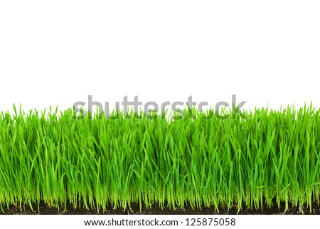 Green  Grass with Fertile Soil and Drops Dew / isolated on white with copy space #125875058