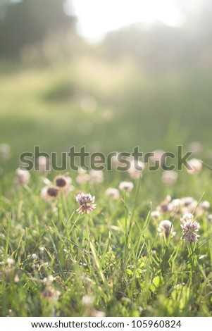 Green grass with flowers before sunset - stock photo