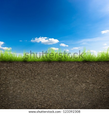 green grass with in soil over blue sky. Environment background #123392308
