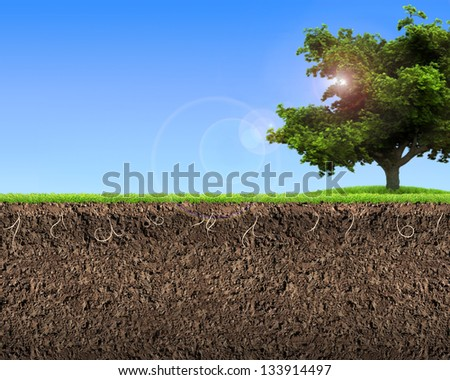 green grass with in soil over blue sky Environment background