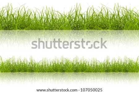 green grass with reflection isolated on white background