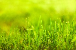 Green grass with sunlight. Nature background. Spring field, meadow