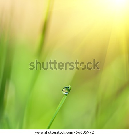 green grass with water drop and sun light