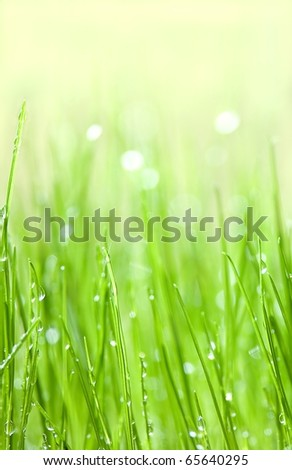 Green grass with water drops background