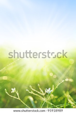 Green grass with water drops background, Close-up