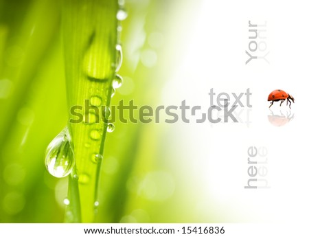 Green grass with water drops on it