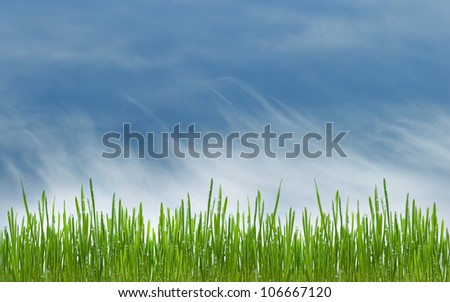 green grass with water drops on meadow on blue sky background