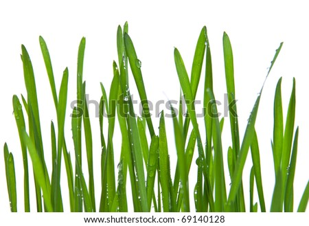 Green grass with water drops on white background