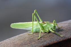 green grasshopper on chair