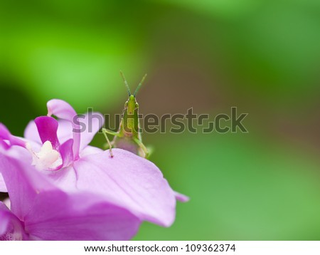 Green grasshopper on flower in  nature